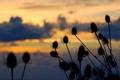 Картинка небо, закат, колючки