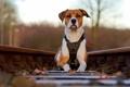 Картинка фон, собака, железная дорога