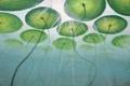 Картинка листья, озеро, пруд, стебли, арт, круглые, под водой