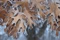 Картинка иней, осень, листья, природа, кристаллы