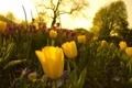 Картинка трава, деревья, цветы, природа