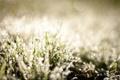 Картинка трава, макро, природа