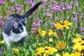 Картинка поле, кошка, лето