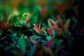 Картинка листья, природа, стебли, обои, растения, вечер, wallpapers
