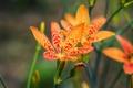 Картинка цветы, природа, лепестки, стебель