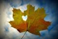 Картинка небо, листья, желтый, настроения, сердце, листик, листочек