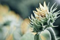 Картинка цветок, макро, свет, природа, лепестки, light, flower