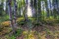 Картинка солнечный свет, деревья, лес, листва