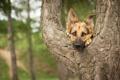 Картинка взгляд, друг, дерево, собака