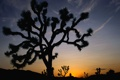 Картинка закат, пустыня, небо, горизонт, силуэт, кактус, дерево