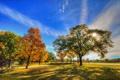 Картинка осень, небо, трава, листья, облака, деревья, парк