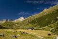 Картинка зелень, животные, горы, дома, скот, альпы, постройки. камни