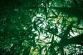 Картинка зелень, листья, свет, ветки, природа, заросли, бамбук
