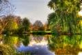 Картинка осень, деревья, река, берега, кустарник, жёлто-зелёная листва, тихая гладь