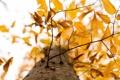 Картинка ветки, листва, дерево