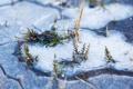 Картинка лед, трава, макро, природа, ice
