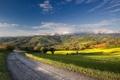Картинка дорога, лето, пейзаж