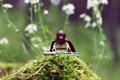Картинка игрушка, Star Wars, звездные войны, лего, фигурка, Obi-Wan Kenobi