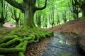 Картинка лес, природа, ручей, мох