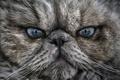 Картинка глаза, кот, взгляд, котэ