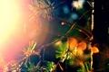Картинка лес, цвета, солнце, лучи, сосна, by mike pro