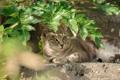 Картинка отдых, лежа, трава, зелень, кошка