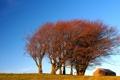 Картинка осень, небо, деревья, дом, холм
