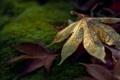 Картинка листья, макро, природа