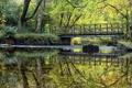 Картинка зелень, вода, деревья, мост, отражение, река, камни