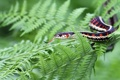 Картинка папоротник, Подвязочная змея, садовый уж