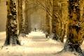 Картинка зима, деревья, природа, аллея