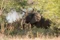 Картинка зелень, трава, природа, Африканский слон