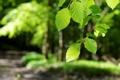 Картинка листья, природа, макро
