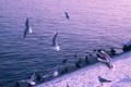 Картинка море, птицы, природа