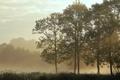 Картинка тишина, трава, деревья, утро, туман