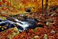 Картинка ручей, река, осень, листва, природа