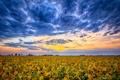 Картинка закат, облака, горизонт, небо, поле, сша, индиана