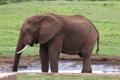 Картинка природа, слон, хобот