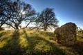 Картинка свет, деревья, камень, холм