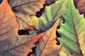 Картинка осень, листья, макро, фото, фон, листок, листки