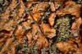 Картинка листья, макро, фото, листок, листки, камешки, full hd
