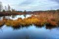 Картинка осень, трава, вода, гладь, отражение, болото, сухая