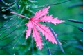 Картинка растение, лист, природа, цвет
