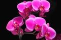 Картинка цветок, свет, обои, тень, лепестки, контраст, орхидея