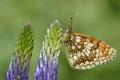 Картинка растение, цветок, крылья, мотылек, бабочка
