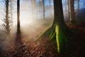 Картинка лес, лучи, свет, природа, дерево, листва, мох