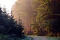 Картинка дорога, лес, пейзаж, утро