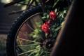Картинка цветы, розы, лепестки, колесо, красные