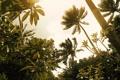 Картинка лес, лето, листья, свет, деревья, природа, пальмы