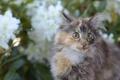 Картинка кот, кошка, взгляд, усы